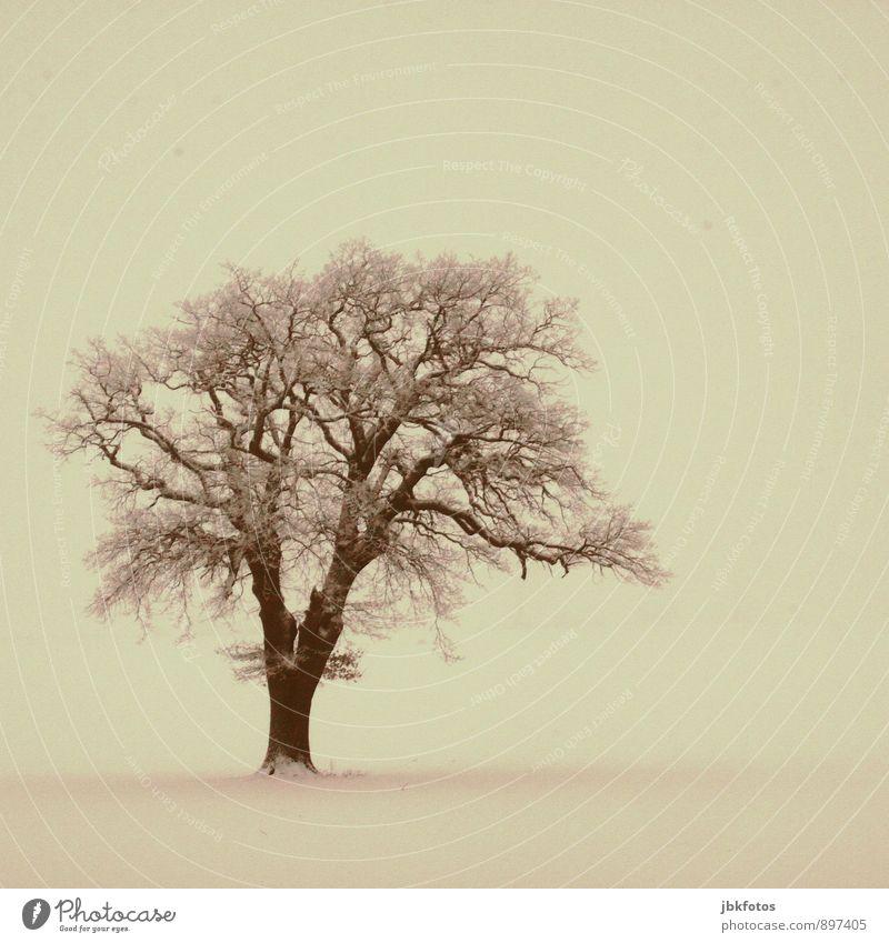norddeutsche Eiche Umwelt Natur Landschaft Pflanze Eis Frost Schnee Baum einzeln Wald ästhetisch dick elegant gigantisch groß einzigartig kalt nachhaltig
