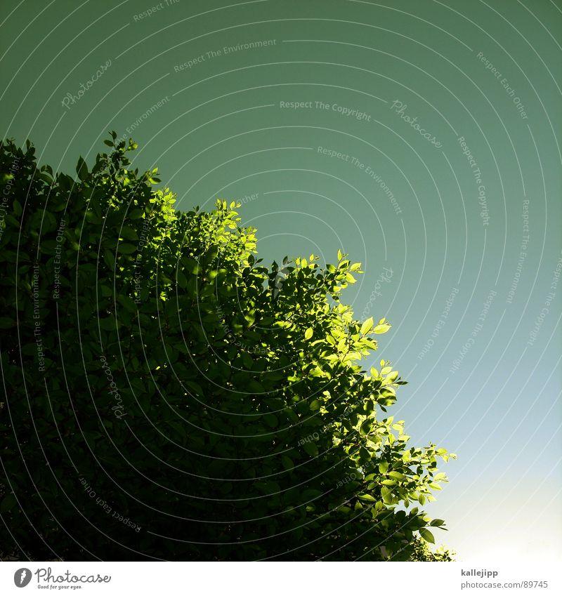 mittagspause Natur Baum Sonne grün Pflanze Blatt Tier Erholung springen Frühling Garten Park Luft Umwelt frisch Wachstum