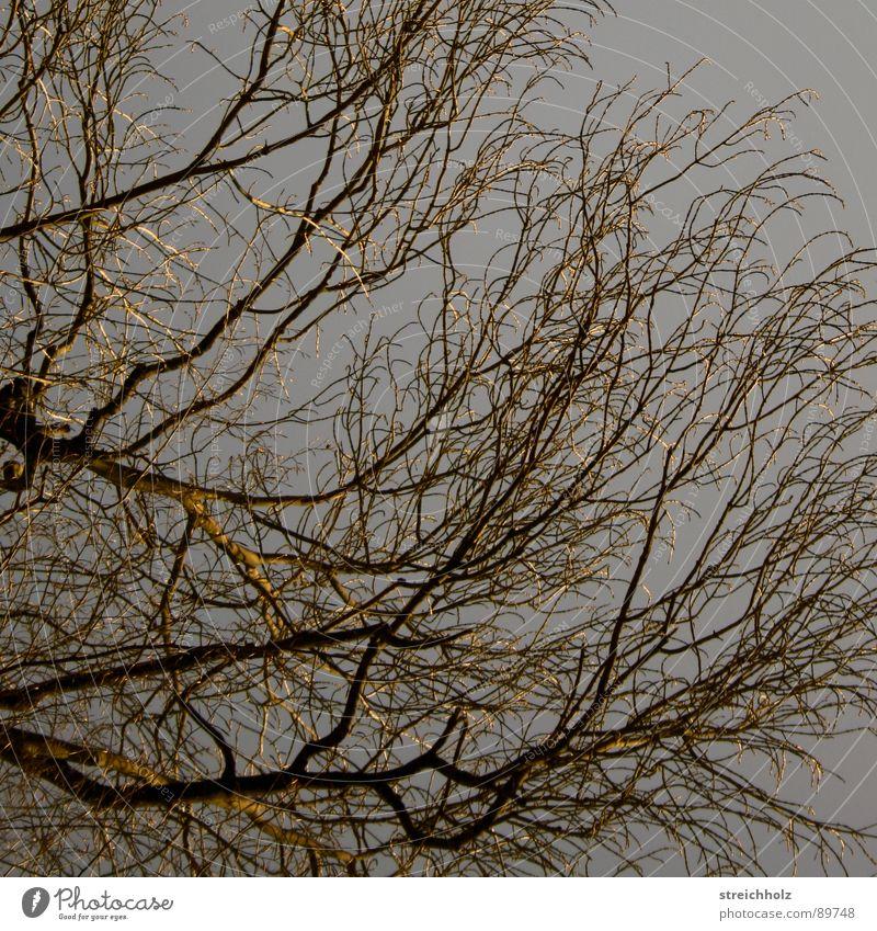 Strukturelles Himmel Baum Ast