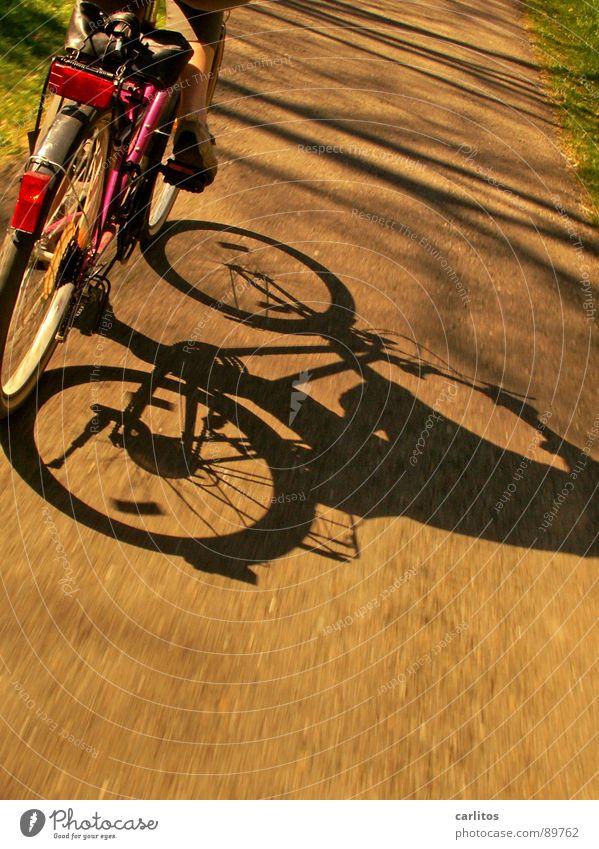 Sonntagsausflug 2 Fahrrad Ausflug Frühling Sommer Fahrradweg Fahrradtour Freizeit & Hobby Schatten Sonnenlicht Dynamik Geschwindigkeit Bewegungsunschärfe