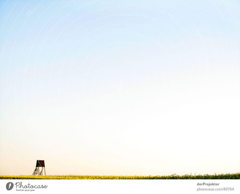 Gute Aussichten Raps Feld gelb Horizont beobachten Holz Landwirtschaft Himmel blau Jagdsitz