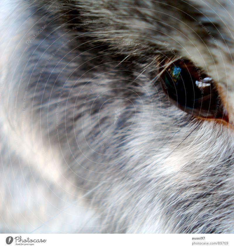 Herr Hoppenstedt Auge Tier grau braun beobachten Fell tierisch Hase & Kaninchen Haustier Säugetier Wimpern Augenbraue Käfig