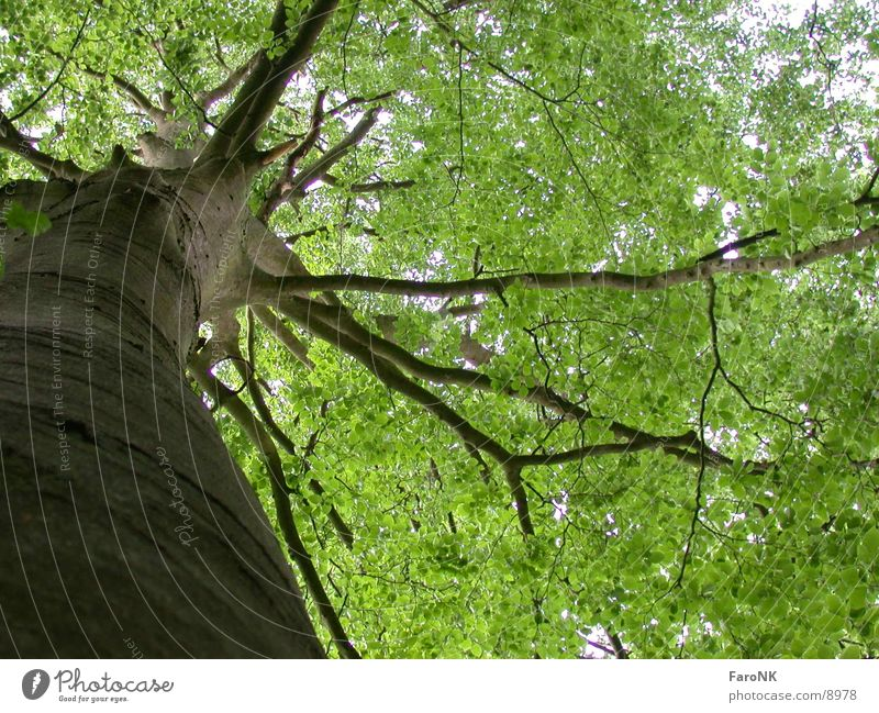 Baum Baum grün Wald Holz