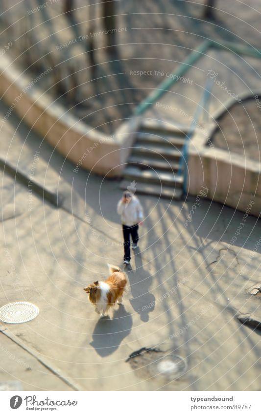 Hund und Schatten Hund Erholung Luft gehen Freizeit & Hobby Spaziergang beweglich Miniatur Wochenende Abendsonne Collie