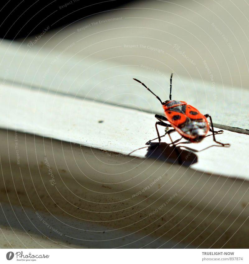 """DA!!! Menschenleer Haus Gebäude Mauer Wand Fassade Terrasse Fenster """"Fensterrahmen Fenstersims"""" Tier """"Insekt; Pyrrhocoris apterus Feuerwanze"""" wählen beobachten"""