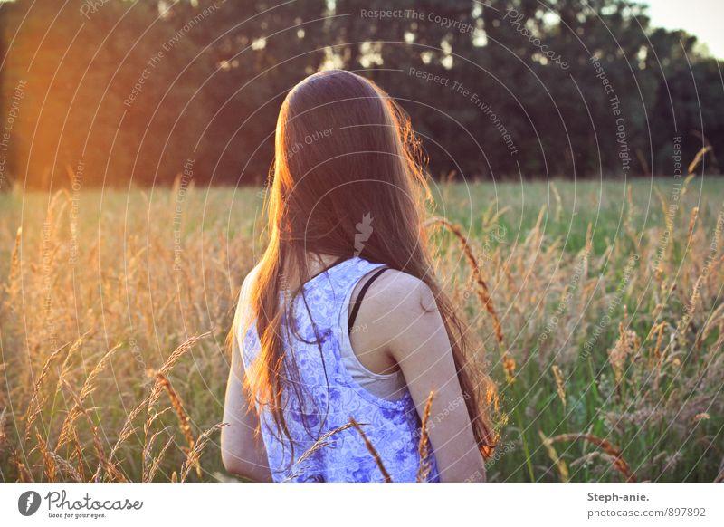 Erinnerungen an einen Sommer feminin Junge Frau Jugendliche Erwachsene 1 Mensch Natur Sonnenaufgang Sonnenuntergang Sonnenlicht Gras Wiese Feld brünett