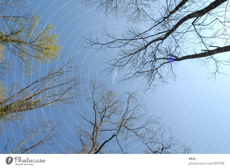 Himmel auf Erden 10 Nadelbaum Wald himmelblau Geometrie Laubbaum Perspektive Nadelwald Laubwald Waldwiese Paradies Waldlichtung ruhig grün Pflanze Baum Blatt