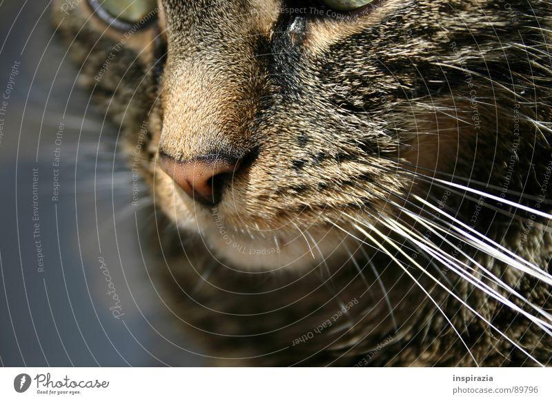 red nose Katze Hauskatze Miau Schnurren Schnurrbarthaare Barthaare Fell Schnauze verträumt Sonnenlicht Sonnenbad Säugetier junge Katze Mietze Haare & Frisuren