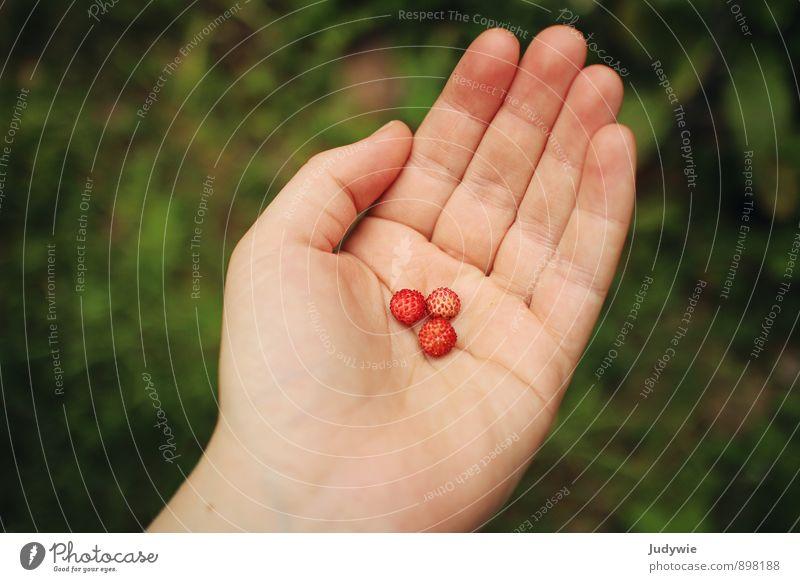 Diät-Dessert Lebensmittel Frucht Erdbeeren Beeren Waldfrucht Ernährung Maniküre Gesunde Ernährung Sommer Hand Finger Umwelt Natur Sträucher Garten festhalten