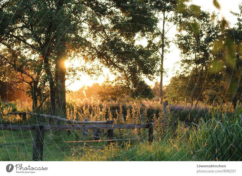 Feierabend Natur Pflanze schön grün weiß Baum Erholung Blume ruhig gelb Gras natürlich Glück hell Stimmung Freizeit & Hobby