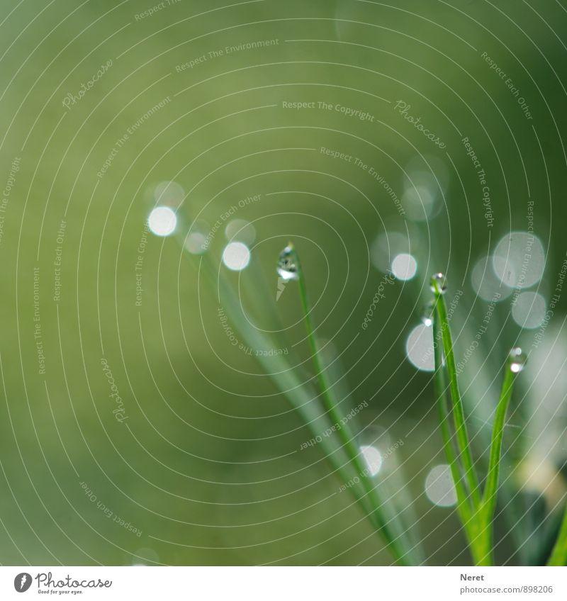 Lichtspiele Natur Pflanze Wassertropfen Herbst Gras Grünpflanze Wiese Feld Kugel grün ästhetisch Farbfoto Außenaufnahme Detailaufnahme Makroaufnahme Morgen