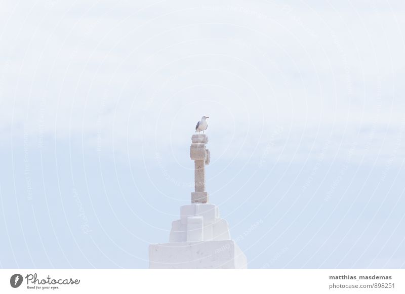 König der Möwen Himmel blau weiß ruhig Wolken Tier Freiheit Vogel Luft Kraft Zufriedenheit sitzen ästhetisch Aussicht beobachten Kirche