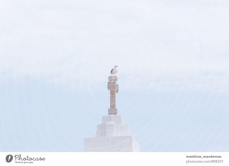 König der Möwen Luft Himmel Wolken Kirche Vogel 1 Tier Kreuz beobachten Blick sitzen ästhetisch Unendlichkeit Neugier blau weiß Coolness Kraft friedlich