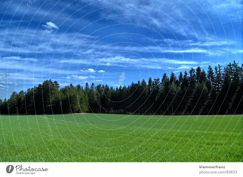 Gruppenfoto Baumschule Himmel Baum grün blau ruhig Wolken Einsamkeit Ferne Wald Gras Landschaft Feld Hintergrundbild Horizont Hoffnung Energiewirtschaft