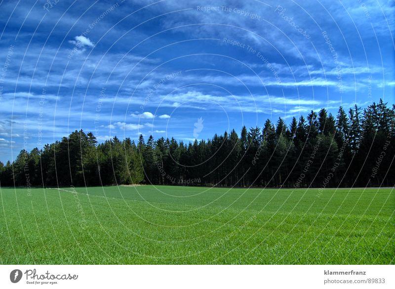 Gruppenfoto Baumschule Himmel grün blau ruhig Wolken Einsamkeit Ferne Wald Gras Landschaft Feld Hintergrundbild Horizont Hoffnung Energiewirtschaft