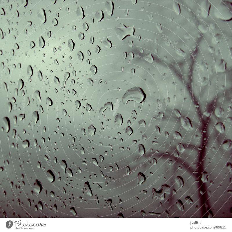 Regen Fenster Fensterscheibe Baum Herbst grau Wolken graue Wolken Regenwolken nass Trauer Einsamkeit Himmel Wasser Verzweiflung Wassertropfen Glas Wetter rain