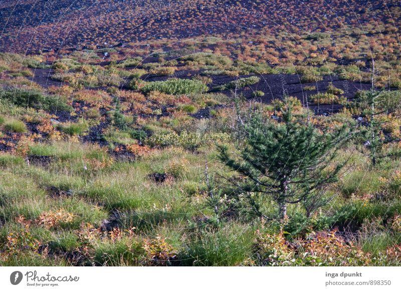 O Tannenbaum Natur Ferien & Urlaub & Reisen Pflanze Baum Landschaft Wald Umwelt Berge u. Gebirge Herbst Wetter Sträucher Klima Hügel Asien Japan Nadelbaum