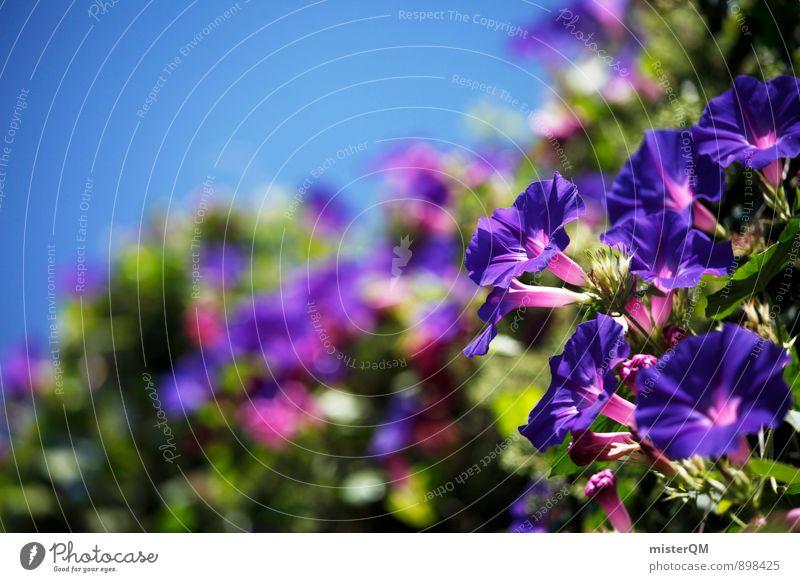 blau. Kunst ästhetisch Zufriedenheit Blume Blumenkasten Blüte Blühend Blühende Landschaften Pflanze Wachstum Südfrankreich mediterran Farbfoto Gedeckte Farben
