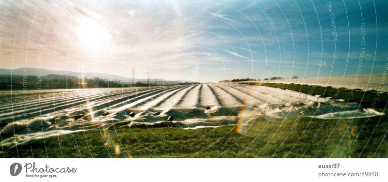 Herbstfeld II Feld Licht Gegenlicht Landwirtschaft Abdeckung Panorama (Aussicht) Arbeit & Erwerbstätigkeit groß Panorama (Bildformat)