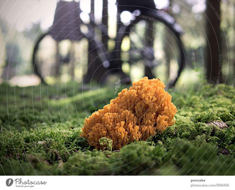 im wald allein Natur schön Baum Landschaft Wald Herbst außergewöhnlich orange Erde gold Fahrrad authentisch frisch Perspektive wandern Urelemente