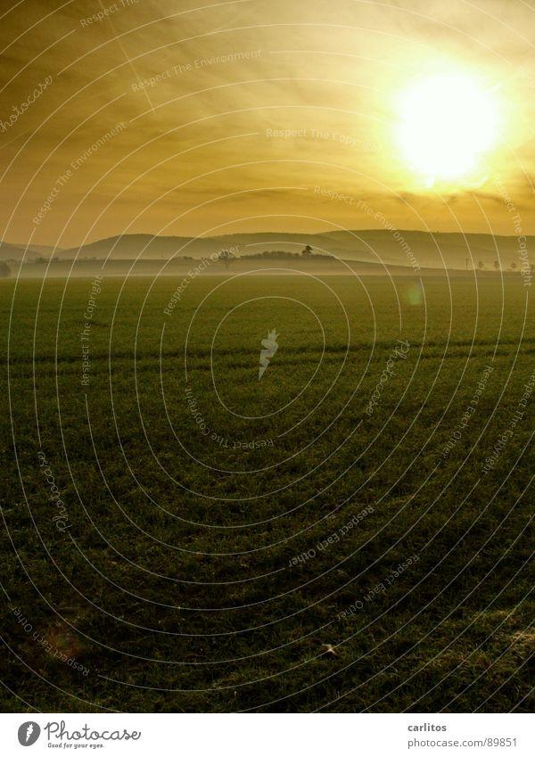 Landeikitsch, die 250te .. Morgennebel Nebel Wiese Zaun Dunst Wolken Farblosigkeit Licht Gras Nebelschleier Hoffnung Tatendrang Schleier Sonnenaufgang grün