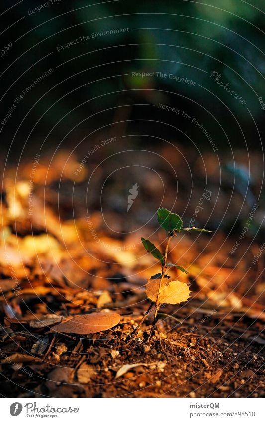 awakening. Umwelt Natur Landschaft Pflanze Erde Herbst Klima Farn Wald ästhetisch Waldboden Wachstum gedeihen Blatt einrichten Durchsetzungsvermögen Leben