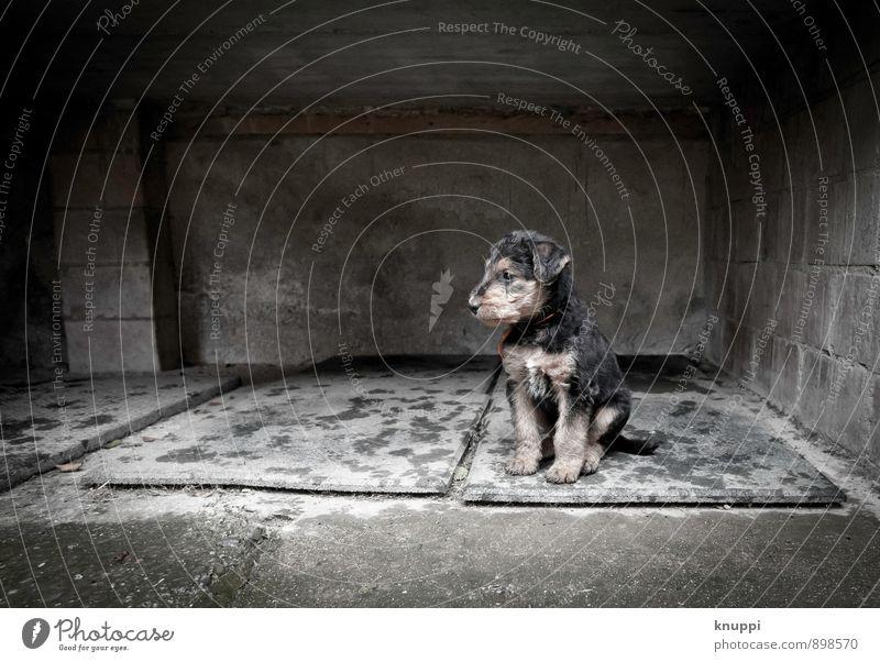 Welpe Umwelt Herbst Winter Regen Tier Haustier Hund Tiergesicht Fell 1 Tierjunges Blick sitzen warten dunkel frech klein nass grau schwarz weiß Kraft Tierliebe