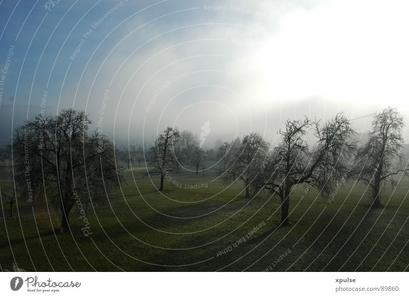 Bäume im Nebel mit langen Schatten Himmel Natur alt weiß Baum grün blau Sonne Winter Ferne Wald dunkel Wiese Herbst Freiheit Gras