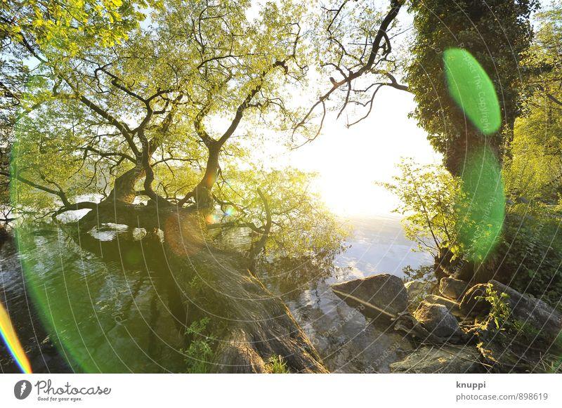 goldener Herbst Umwelt Natur Pflanze Wasser Sonne Sonnenaufgang Sonnenuntergang Sonnenlicht Sommer Schönes Wetter Baum Sträucher Efeu Blatt Wildpflanze Park