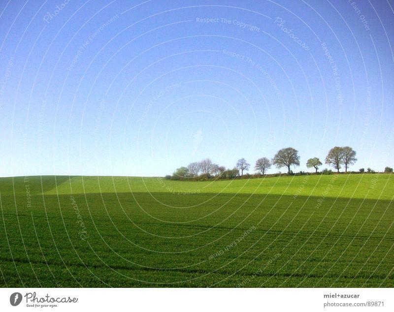 satte landschaft Himmel Natur blau grün Sommer Baum Farbe Stillleben