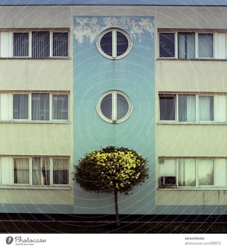 Design like yesterday Bürogebäude Baum Fenster veraltet Gebäude Haus Pflanze grün türkis Plattenbau Flachbau Ostalgie Ostzone armselig