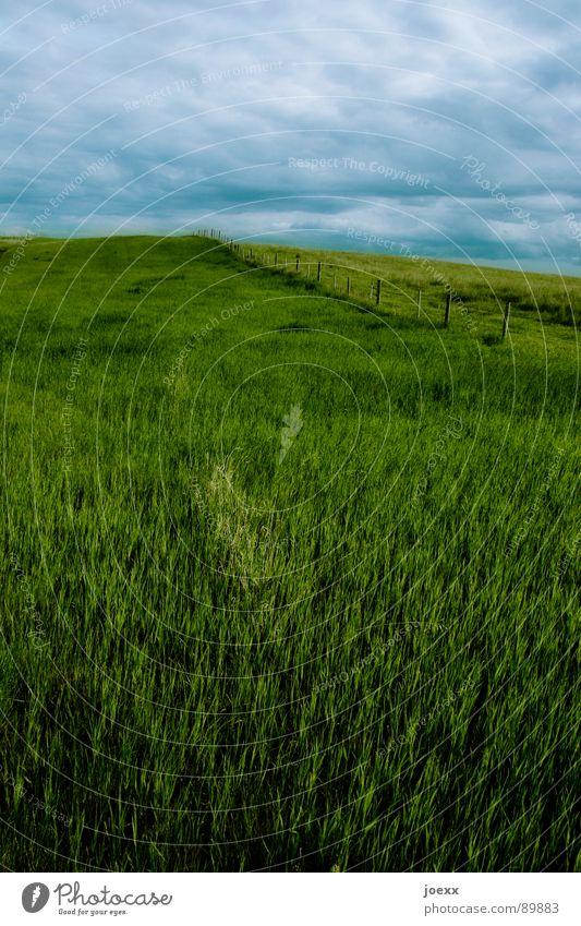 Oben sieht's düster aus ... Himmel blau grün Wolken Ferne Wiese Landschaft grau Gras Horizont Freizeit & Hobby Hügel Unendlichkeit Weide Skyline Unwetter