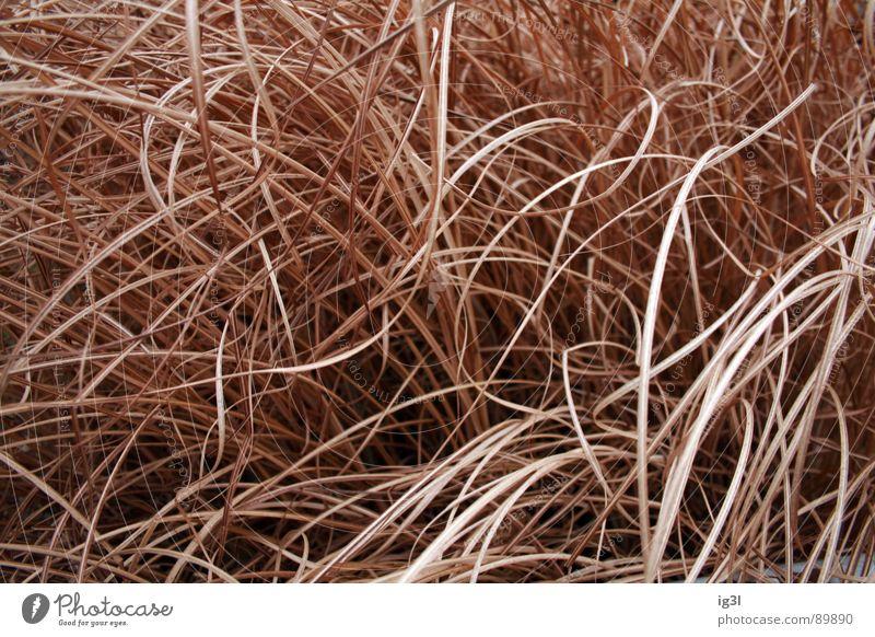 holzhaar Haarsträhne dünn schmal lang Muster Kopfbedeckung Fell Physik schön Haarwaschmittel Sauberkeit Reinigen groß Lichtpunkt glänzend rot gelb schwarz