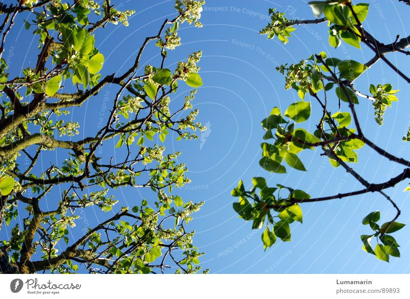 Frühlingsannährung Himmel Baum grün blau Ferien & Urlaub & Reisen Blatt Frühling leer Wachstum nah Ast Blühend gebrochen Zweig Lücke Rest
