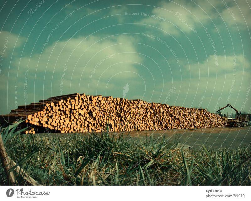 Neue Heimat Baumstamm Abholzung Güterverkehr & Logistik Unternehmen Holz auftürmen Forstwirtschaft Wolken produzieren Verkehr Stapel festmeter Natur Himmel