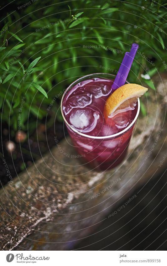cocktail Getränk Erfrischungsgetränk Limonade Saft Alkohol Longdrink Cocktail Glas Trinkhalm trinken Pflanze Garten ästhetisch exotisch Flüssigkeit lecker