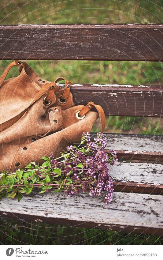 unterwegs Natur Pflanze Blume Umwelt Gras Blüte natürlich Park Bank Blumenstrauß herbstlich Tasche Wildpflanze