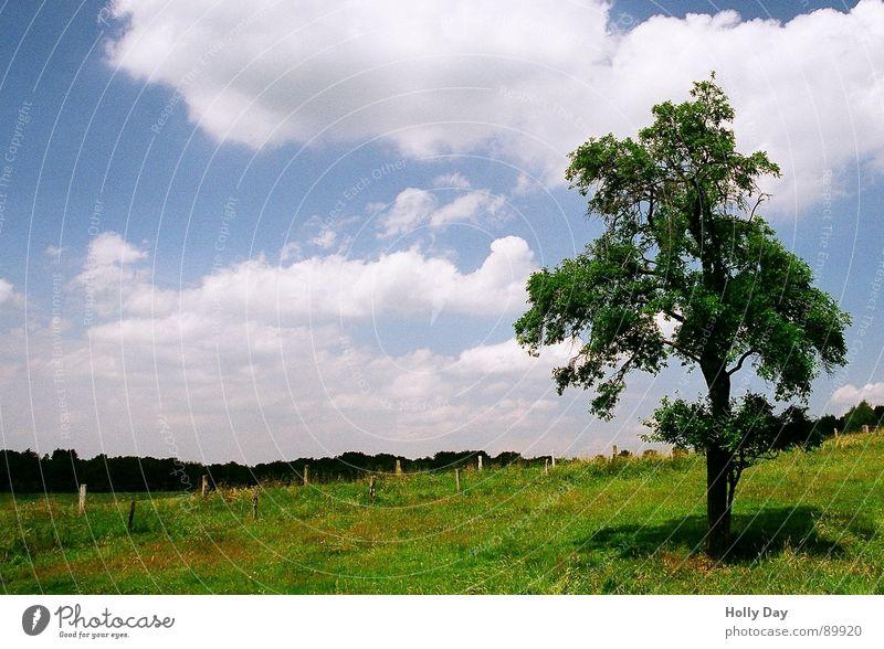 Baum von rechts Wiese Wolken Sommer Mittagspause 2006 Gras Blatt Schatten Fotolust Mitten in Deutschland Rasen