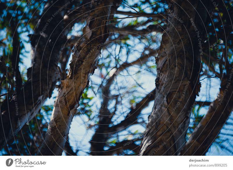 Verästelt Natur blau Wasser Sommer Baum Erholung Meer ruhig Freude natürlich Holz außergewöhnlich braun Insel beobachten Schönes Wetter