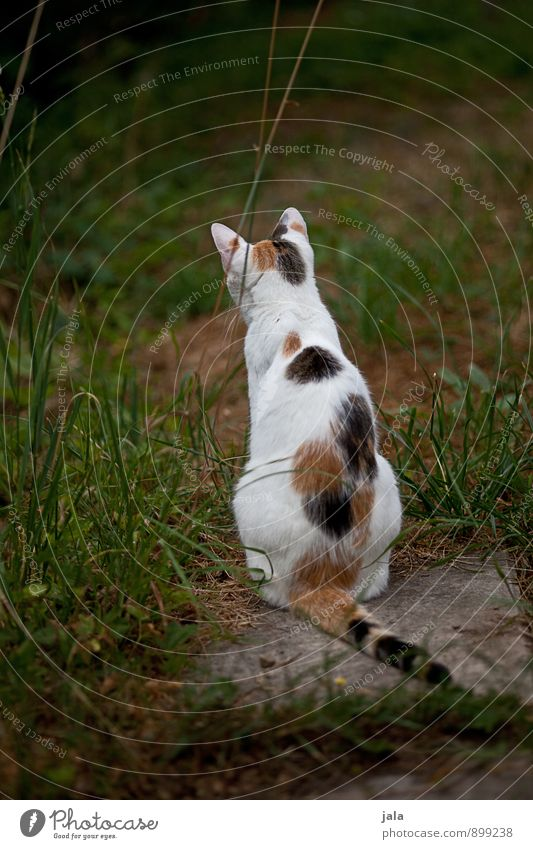 lauern Katze Tier natürlich ästhetisch Haustier
