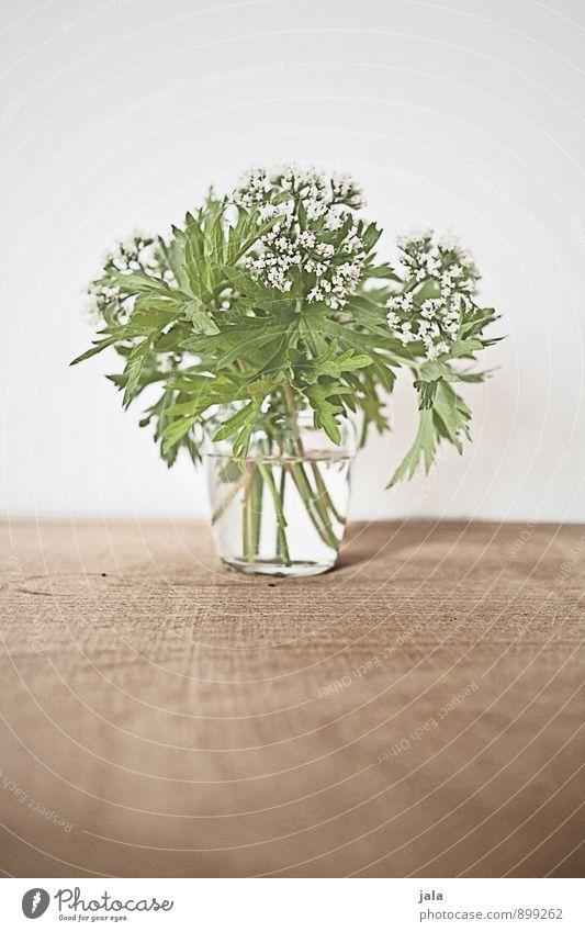 sträußlein Pflanze schön Blume Blatt Blüte natürlich elegant ästhetisch einfach Blumenstrauß Wildpflanze