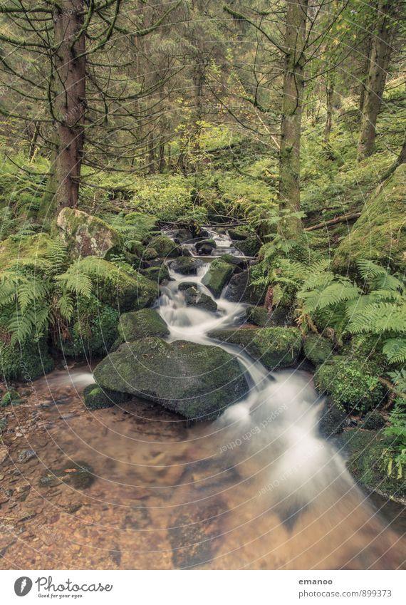 black forest brook Natur Ferien & Urlaub & Reisen Pflanze grün Wasser Baum Landschaft Wald Umwelt Berge u. Gebirge natürlich Felsen Regen Sträucher wandern nass