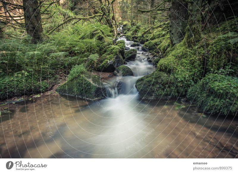 Schwarzwaldwasser Natur Ferien & Urlaub & Reisen Pflanze grün Wasser Baum Erholung Landschaft ruhig Wald Berge u. Gebirge natürlich Felsen Regen Tourismus