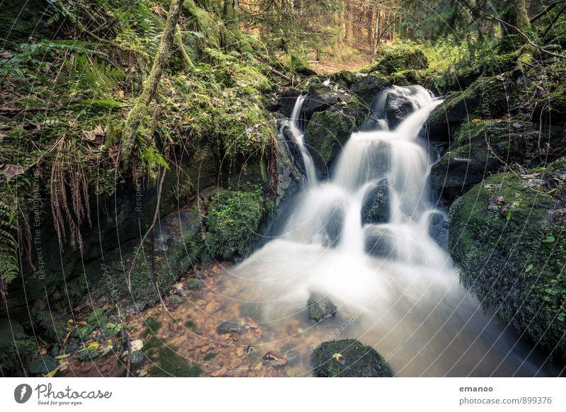 Schwarzwaldwasser Ferien & Urlaub & Reisen Berge u. Gebirge wandern Umwelt Natur Landschaft Pflanze Wasser Herbst Regen Blume Sträucher Moos Wald Urwald Felsen