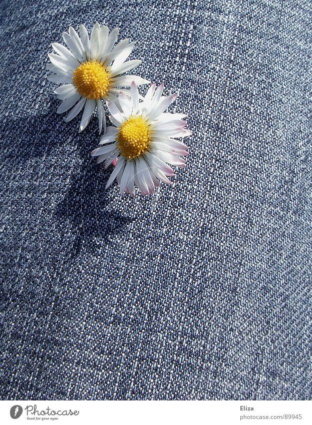 Schattenspielchen Gänseblümchen Blume Blütenblatt Pollen gelb beleidigt Trauer Frühling Sommer Sonne Jeansstoff Spielen Neugier Sonnenbad Blühend schmollen