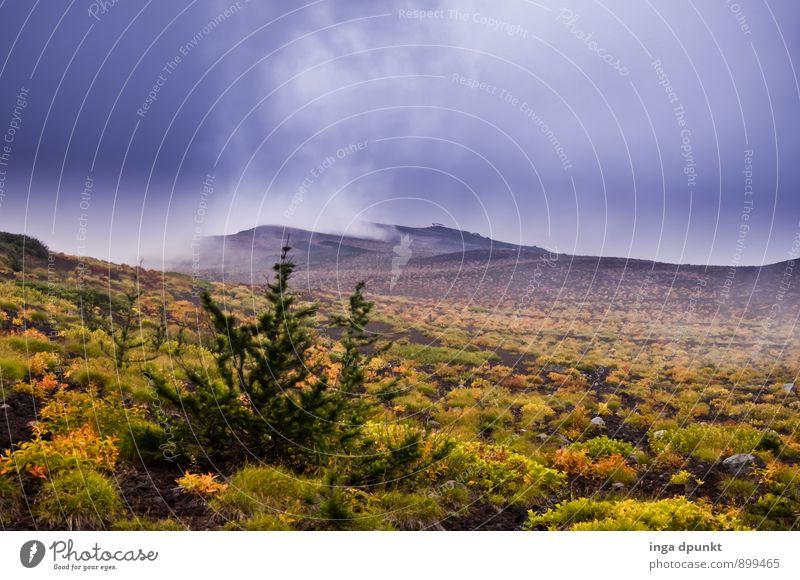 Der Herbst zieht ein Natur Pflanze Baum Landschaft Wald kalt Umwelt Berge u. Gebirge natürlich Wetter Wachstum Wind Sträucher Abenteuer Jahreszeiten