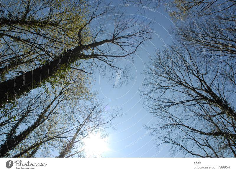 Himmel auf Erden 11 Nadelbaum Wald himmelblau Geometrie Laubbaum Perspektive Nadelwald Laubwald Waldwiese Paradies Waldlichtung ruhig grün Pflanze Baum Blatt