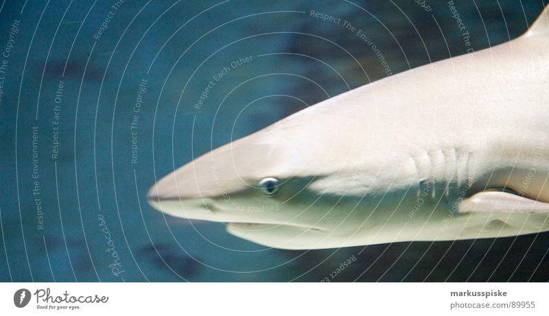 hai Wasser Meer Tier Fisch Gebiss Haifisch Maul Schwimmhilfe Kiefer