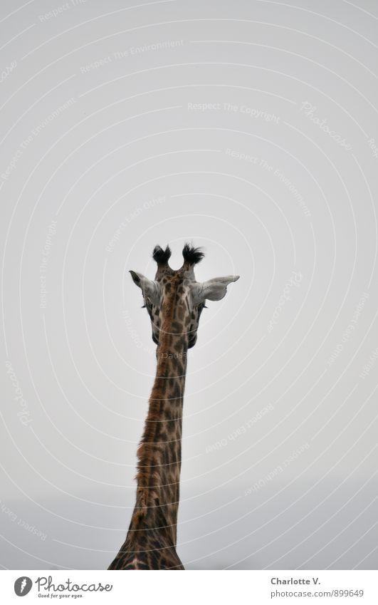 Trübe Aussichten ruhig Tier schwarz Traurigkeit grau Stimmung braun träumen Nebel trist Wildtier stehen warten hoch einfach Unendlichkeit