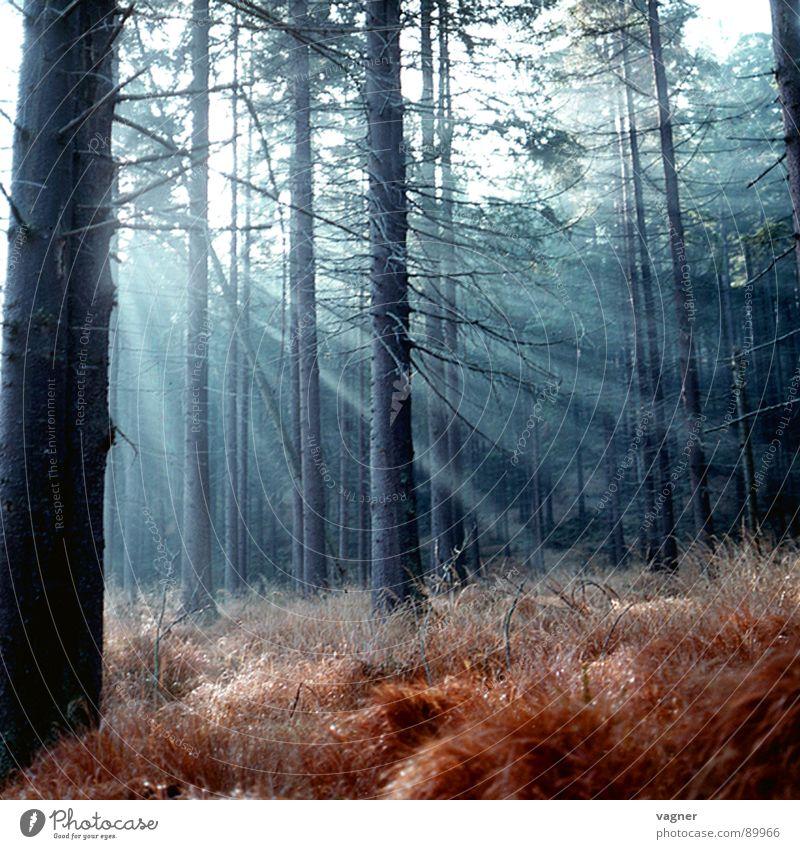 Herbstmorgen im Wald Morgen Gras Sonne Beleuchtung Natur Morgendämmerung